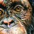 Chimpanzy